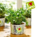 Ortolino Parsley